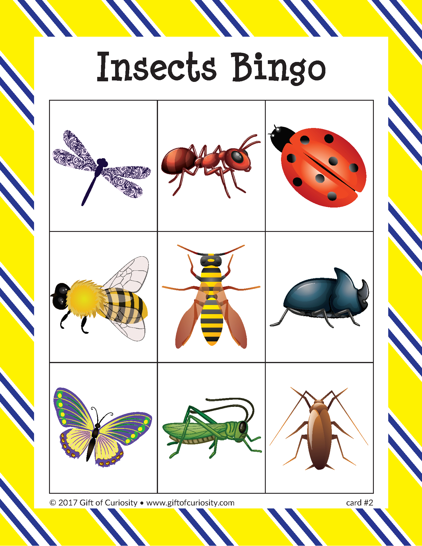 Insects Bingo - Gift Of Curiosity