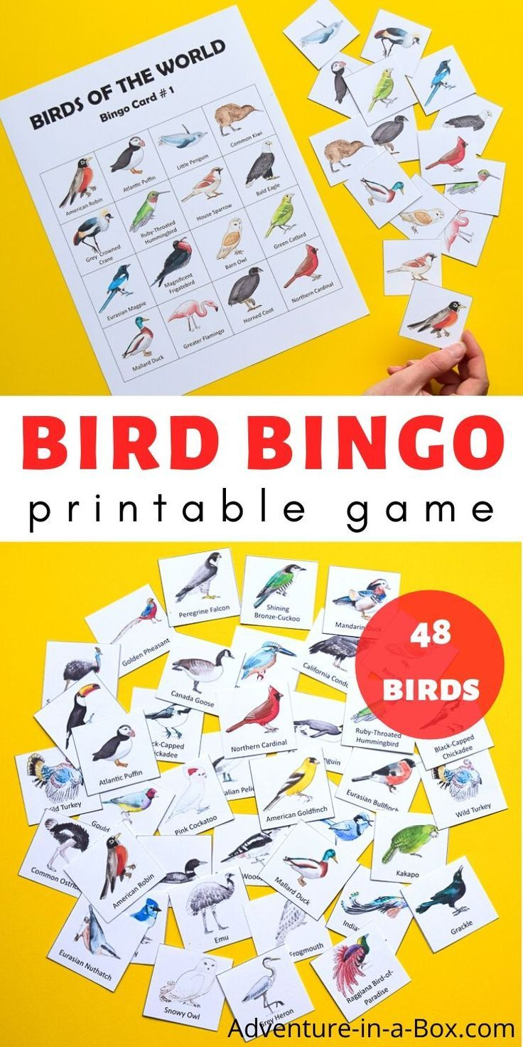 Bird Bingo Printable Game   Bingo Cards, Printable Board